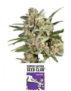 Super Mad Sky Floater seeds