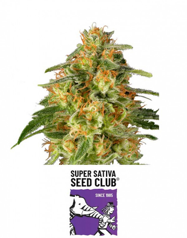 TNT-Trichome seeds
