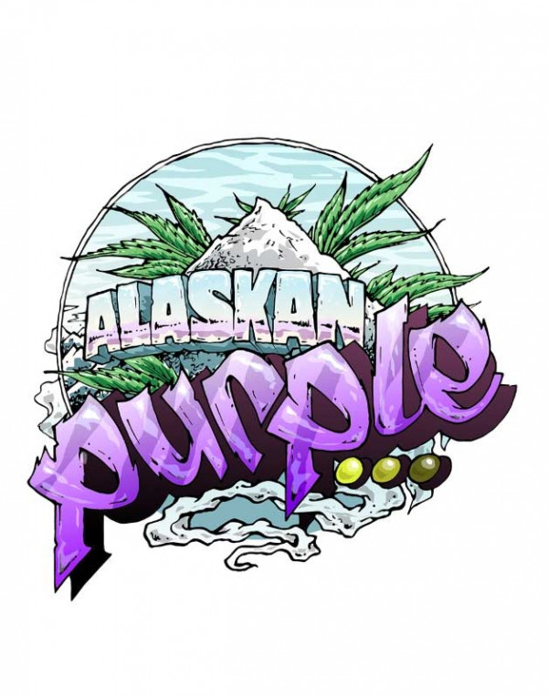 Auto Alaskan Purple seeds