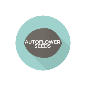 Autoflower
